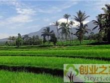 政府给予支持的一些农村创业点子